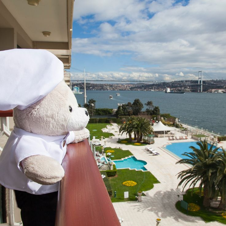 This breathtaking view from the balcony made the long journey from Teddyland to Istanbul well worth it! #ChefTeddy