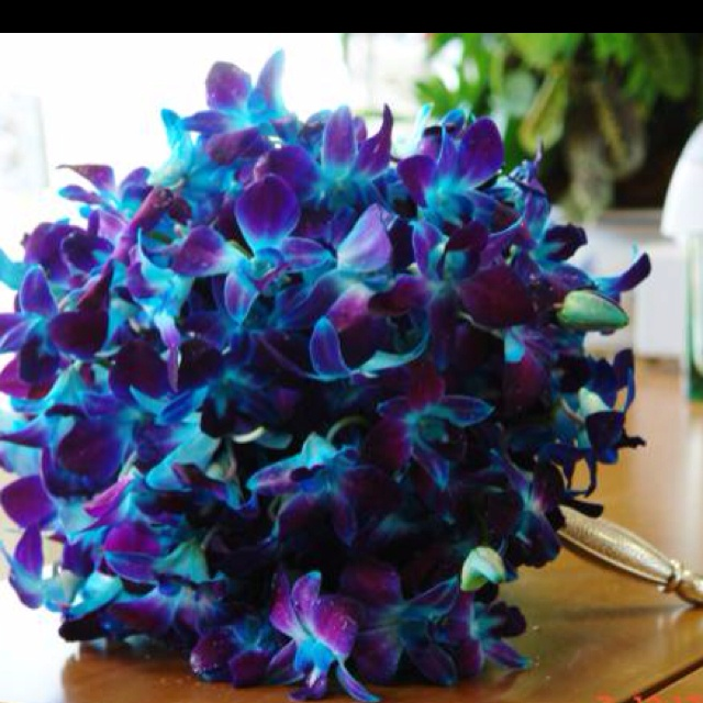 Blue Dendrobium Bouquet | www.imgkid.com - The Image Kid ...