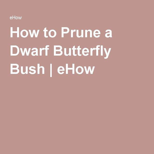 How to Prune a Dwarf Butterfly Bush | eHow
