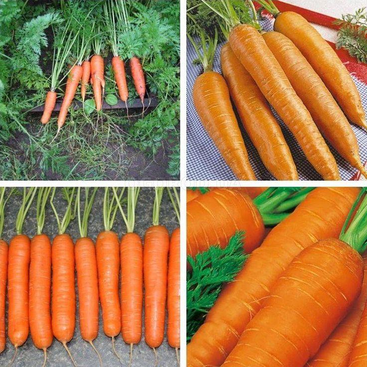 Как вырастить крупную и сладкую морковку