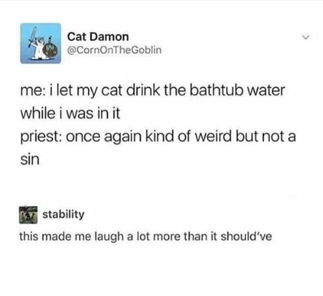 Cats Talking One Slaps Other