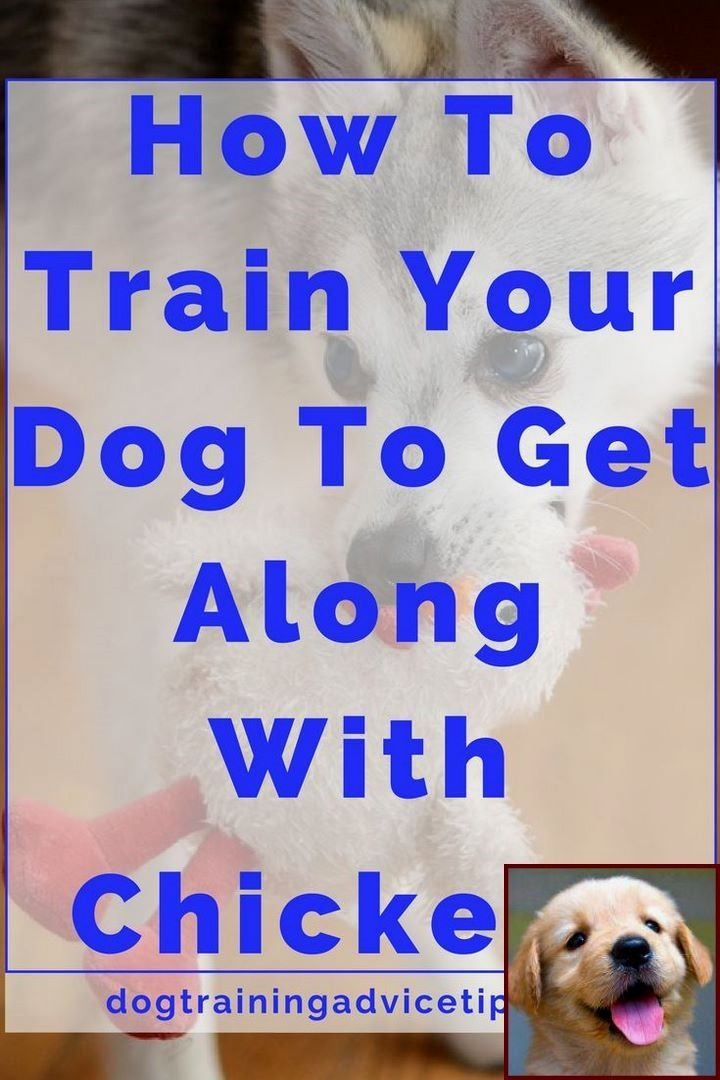 House Training A Puppy In 5 Days And Dog Training Courses Nz