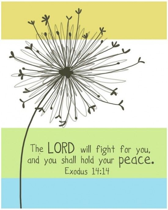 You shall hold your peace.: Scriptures Ver, Canvas Ideas, The Lord, Remember This, Inspiration Bible Ver, Bible Scriptures, Exodus 14 14, Exodus 1414, Christmas Trees
