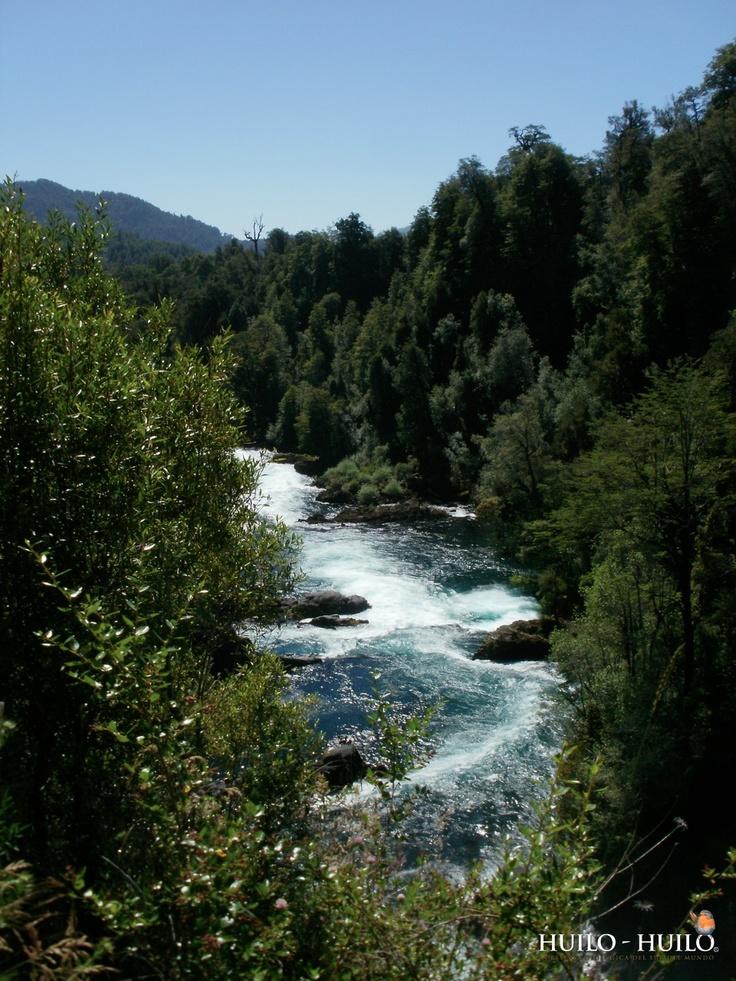 Sendero Salto de Huilo Huilo - Puma