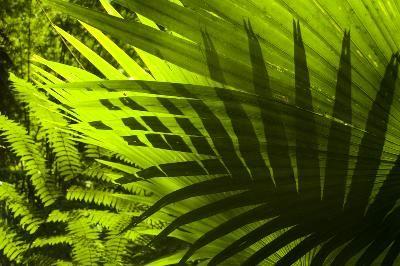 ...puoi avere piante sempre belle e vigorose grazie a Bicarbonato Solvay? Scopri come!