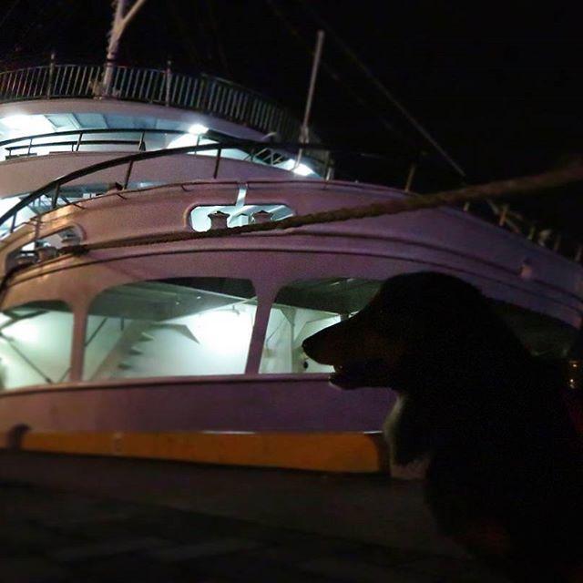 #おーちゃんです(´▽`)#dog#miniaturedachshund #KOBEHARBORLAND #kobe_port#how_lovely #concerto#神戸#神戸ハーバーランド #神戸港#夜景#MOSAIC#高浜岸壁#コンチェルト#ミニチュアダックス#ブラックタン#ふわもこ部 #愛犬#ペット#わんこ#可愛い#神戸港開港150年 #kobe_chuo