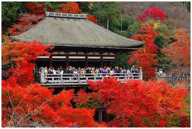 Kyoto Photo: Kiyomizu-dera Main Hall With Maples