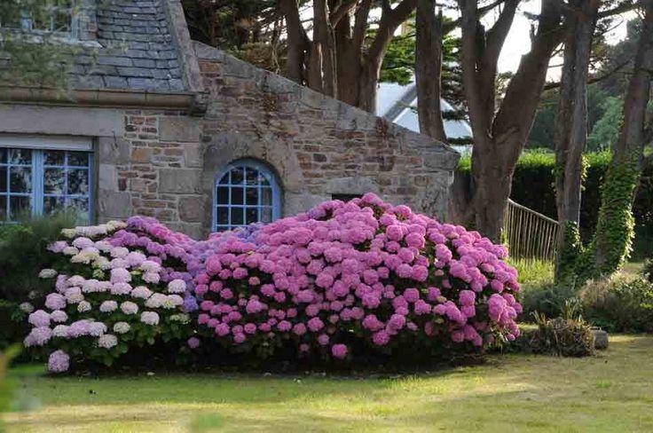 Au coeur de l'Hortensia - Nos idées et conseils - Roué Pépinières