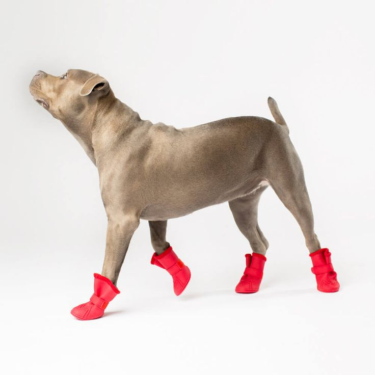 Canada Pooch Wellies Dog Boots | Protect your dog's paws from rain, snow, salt and mud with Wellies boots