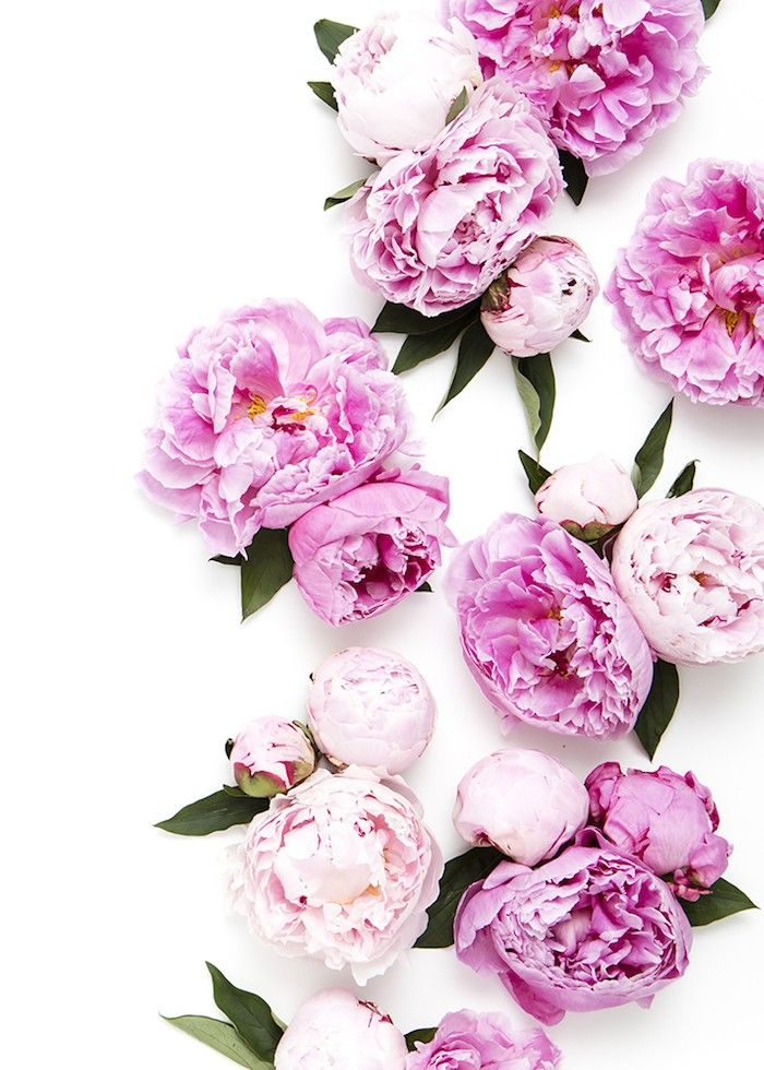 New in the SC Stockshop: Peony Perfection! Photography by Shay Cochrane   Find it in the scstockshop.com