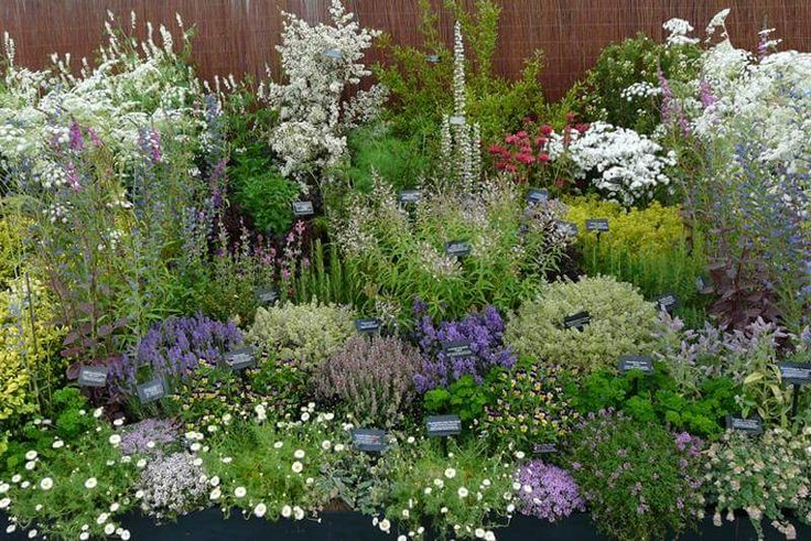 """Typical plants found within a Witch's Garden include: Rosemary, Sage, Parsley, Mint, Catnip, Henbane, Marjoram, Thyme, Rue, Angelica, Bay, Oregano, Dill, Aloe, Arnica, Chives and Basil, which is especially common in a Witch's Garden, as it is considered to be a strong herb of protection. It's said, """"Where Basil grows, no evil goes!""""."""