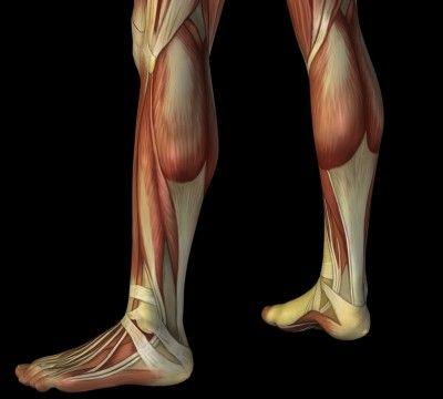 Panturrilha, dor, músculo