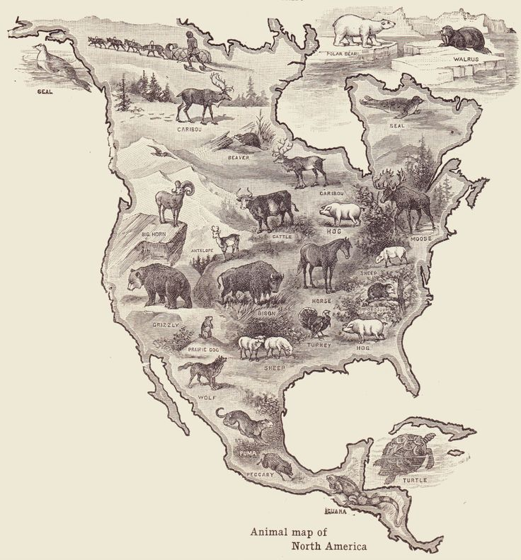 Animals of North America, from a 1920 geography textbook. (Sick tattoo idea)
