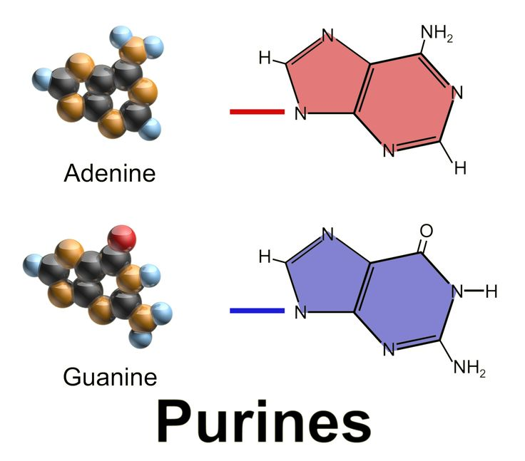 30 Best Purine And Pyrimidine Synthesis Images On