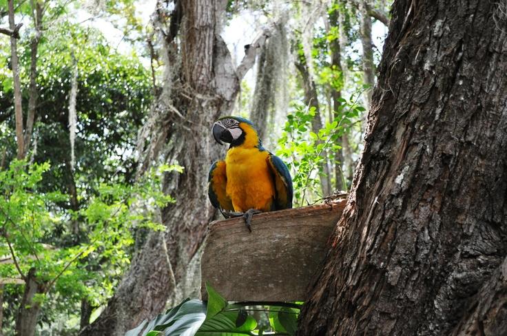 Colombia - Guacamaya, parque Gallineral, San Gil Santander