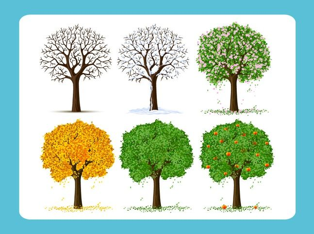 set of floral seasonal trees