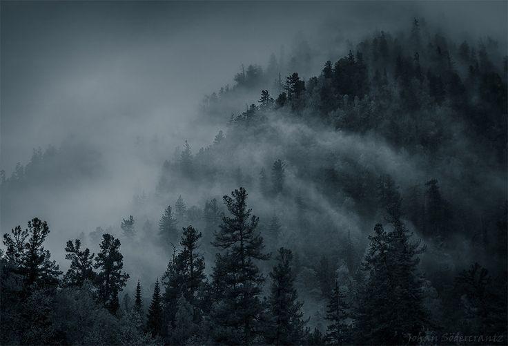 Photo Forest Breath by Johan Södercrantz