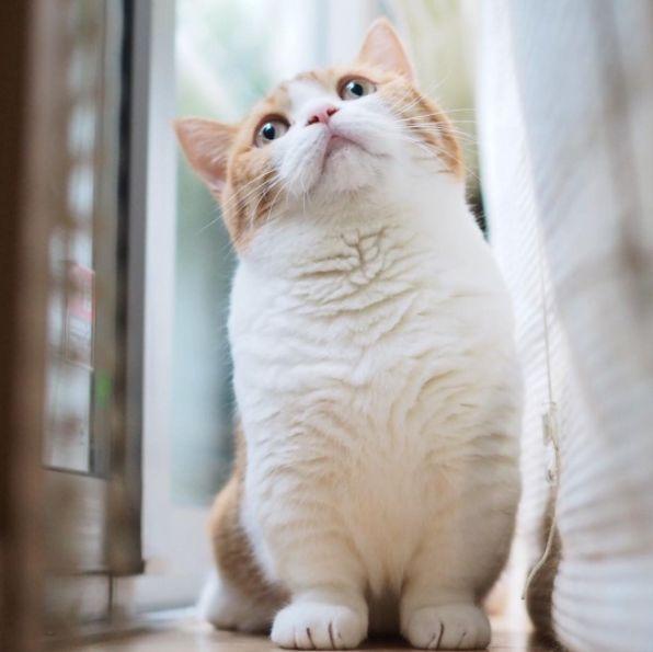 21 Munchkin-Katzen, die Sie zum Keuchen bringen – Tiere – #Tier …   – Adorable Kittens