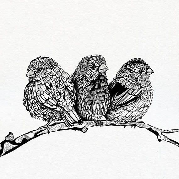 Sparrows art print  Limited edition  12 x 12 unframed