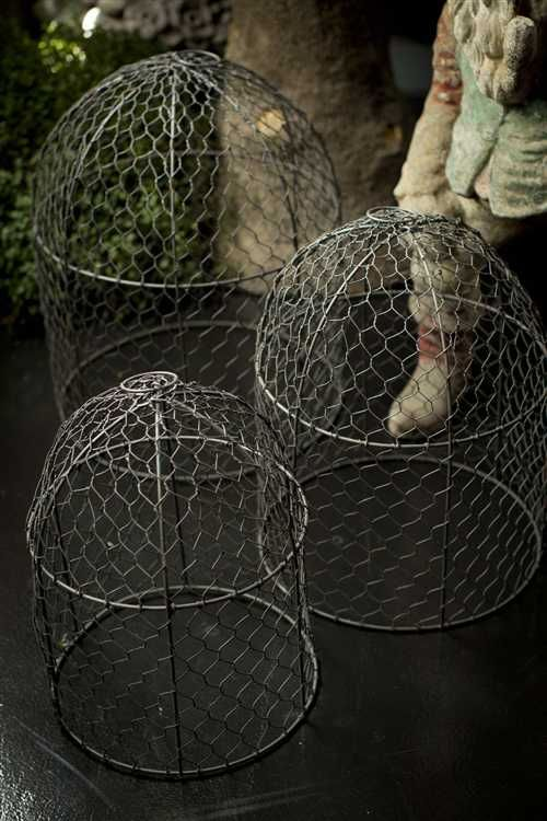 What I Need To Keep The Hens Out Of My Plants Gardening Pinterest Wire En And Garden