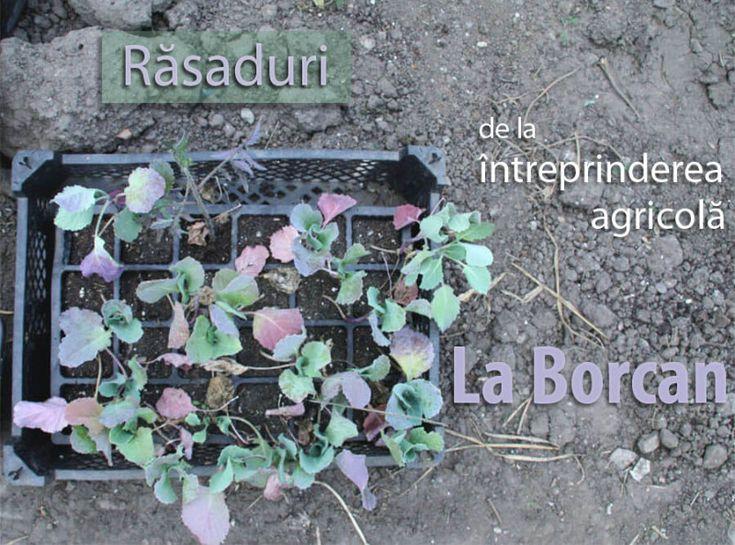 PlatFerma | La Borcan, Întreprinderea Agricolă care Livrează Hrănătate | http://platferma.ro