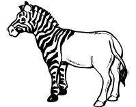 Lessuggesties voor het boek de snelste zebra van de wereld » Juf Sanne