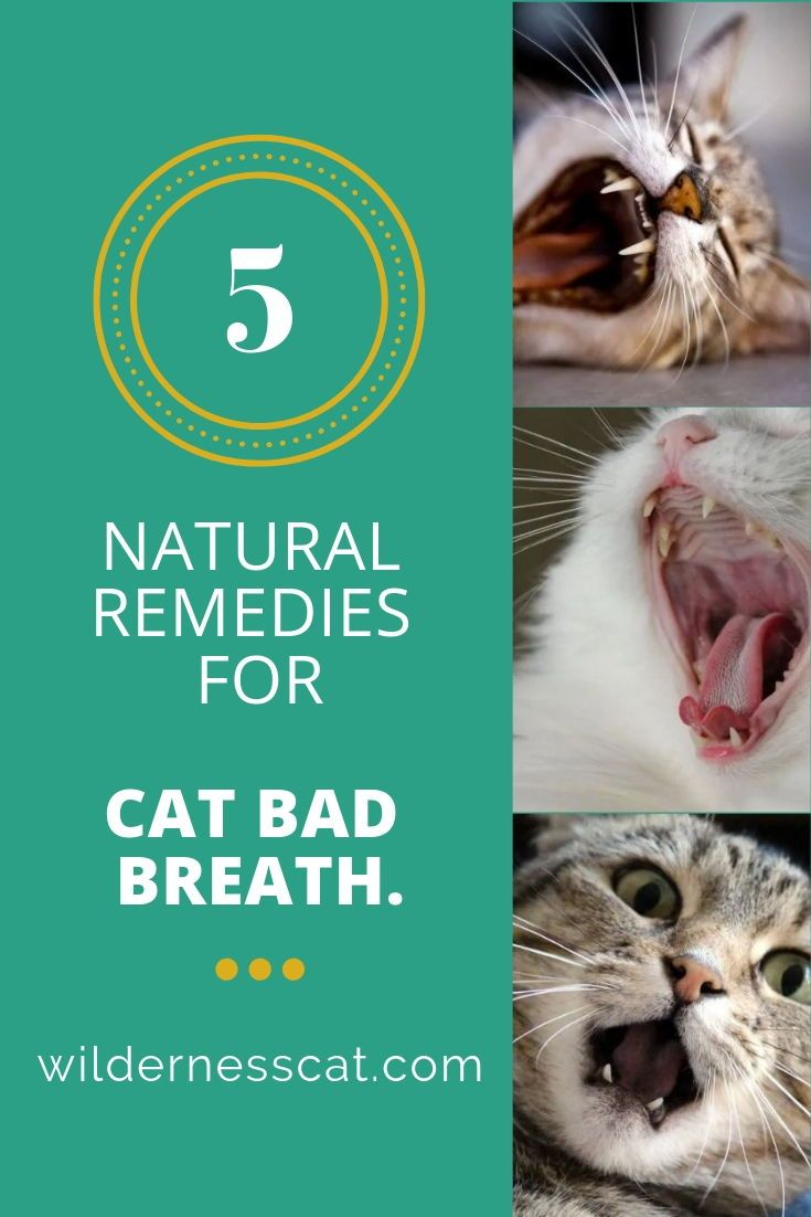 Cat Bad Breath Causes And Natural Remedies For Bad Breath In Cats Wildernesscat Cat Bad Breath Cat Breath Bad Breath