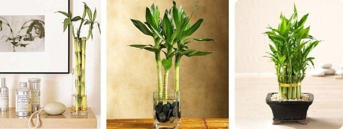 Plantas interior poca luz. Plantas para lugares oscuros. Plantas de interior para ambientes con poca luz. Potus. Helecho. Sansevieria. Espada de San Jorge.