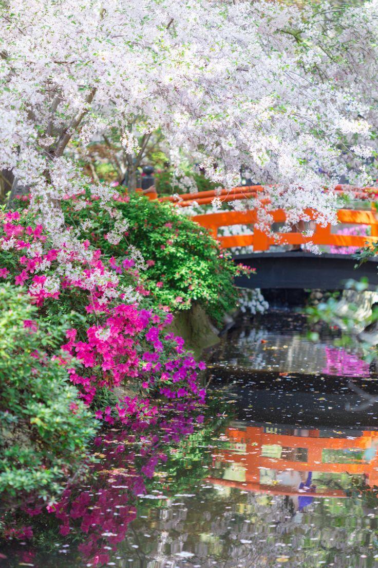 Descansos Japanischer Garten Mit Uppigem Laub Pinkfarbenen Azaleenbluten Und Ausgedehnten Kirschbluten Lush Japon Bahceleri Bahce