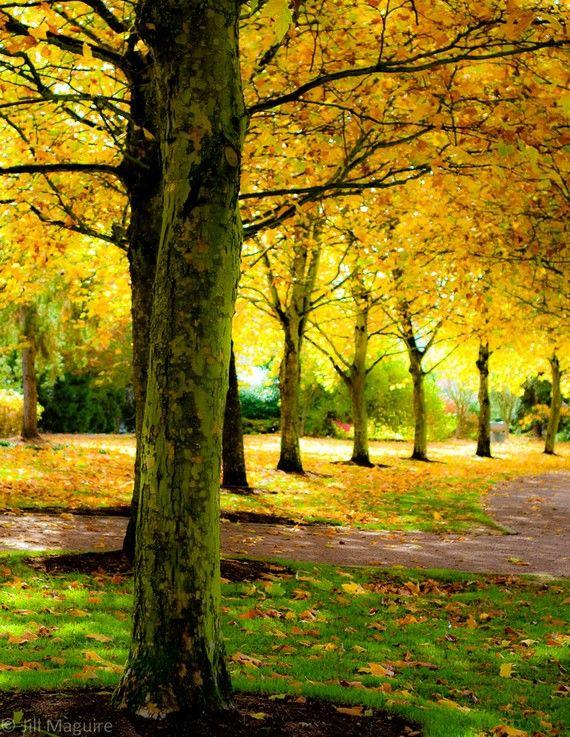 Fall foliage autumn print in golden yellow - yaa gimana kalau kita piknik di sini, ngobrol sambil baca buku?