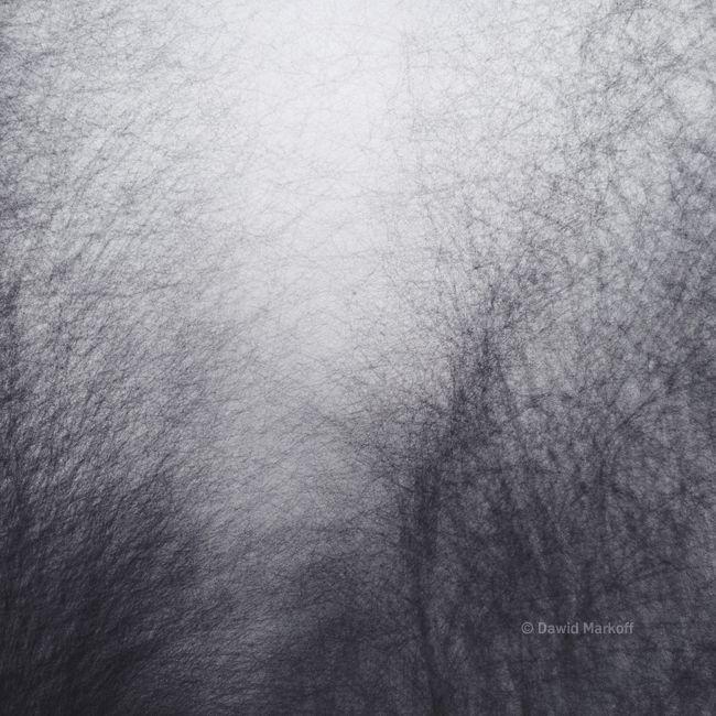 Poniedziałkowe drzewa by Dawid Markoff