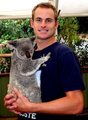 Andy Roddick w/ koala!! aww!