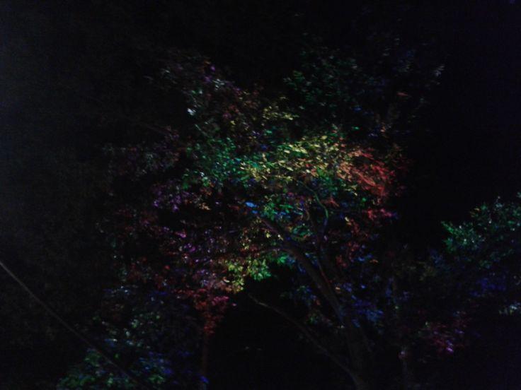 rainbow on the tree.