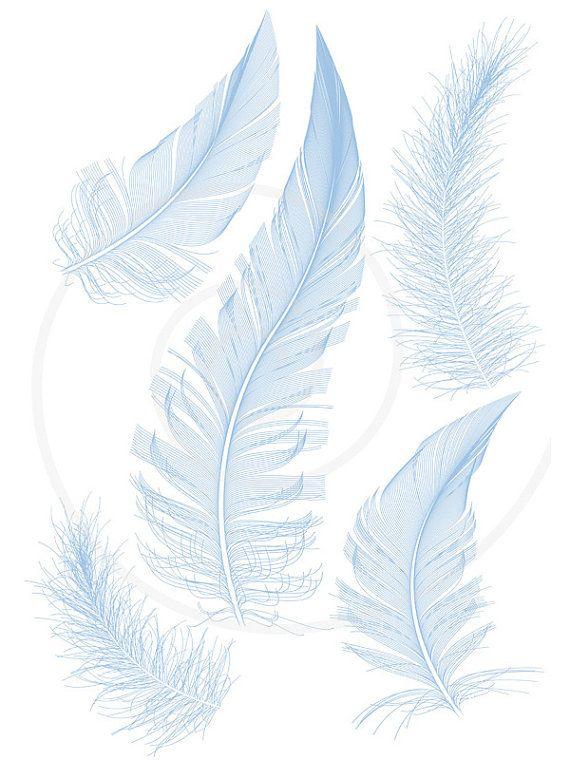 This Is Quot Set Of Detailed Blue Bird Feathers Quot By Illustree