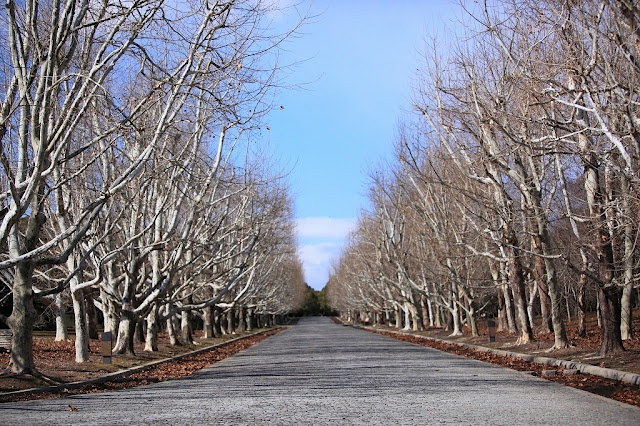 The avenue in the plane which is in the Oosaka expo park.