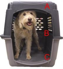 Finding The Right Pet Travel Crate | Pet Relocation