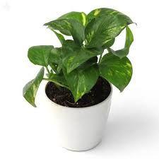Send Plants,  http://w11.zetaboards.com/loan/profile/4185824/  Indoor Plants,House Plants,Plants For Sale,Potted Plants,Indoor House Plants,Buy Plants Online,Indoor Plant,House Plants For Sale,Plant Store,Plant Delivery