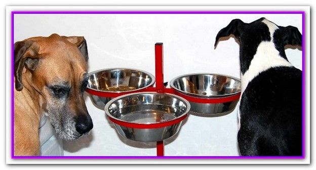 Best Dog Food For Great Dane Pups At A Glance Our Choices For