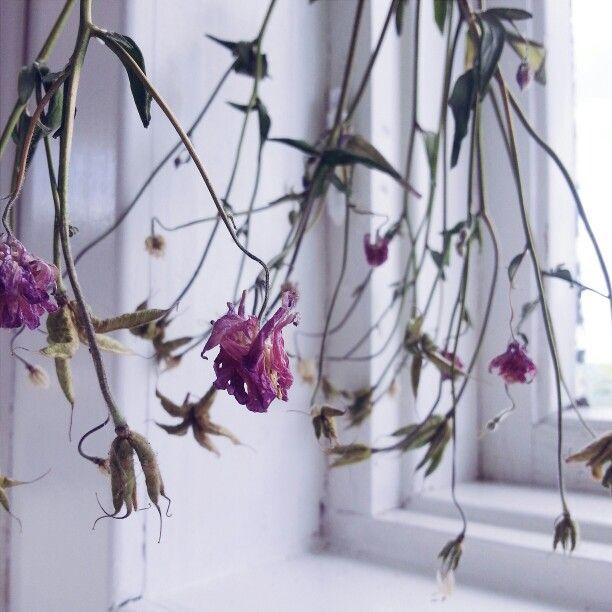 Dried flowers♡