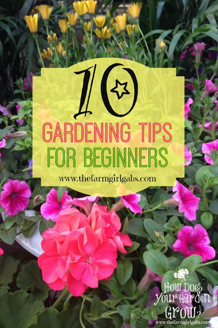10 simple Gardening Tips and Ideas for Beginners. Spring is almost here.  It's time to plan your vegetable and flower gardens.