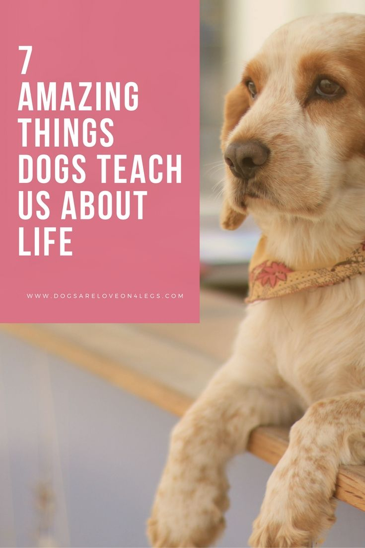 7 Amazing Things Dogs Teach Us About Life