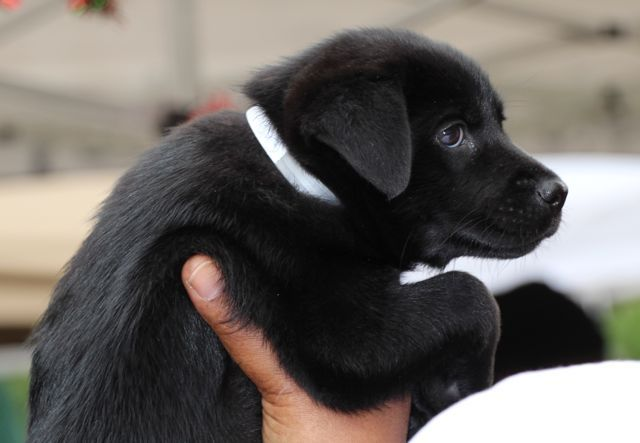 """""""7 Reasons Why You Should Adopt a Rescue Puppy"""" article from puppyintraining.com  good info!!"""