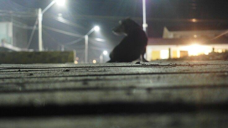 Mi hermoso perro Baba.