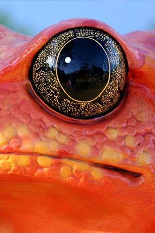 Bel oeil de grenouille                                                                                                                                                      Plus