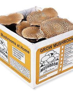 Portabella Mushroom Growing Kit | Grow Your Own Mushrooms