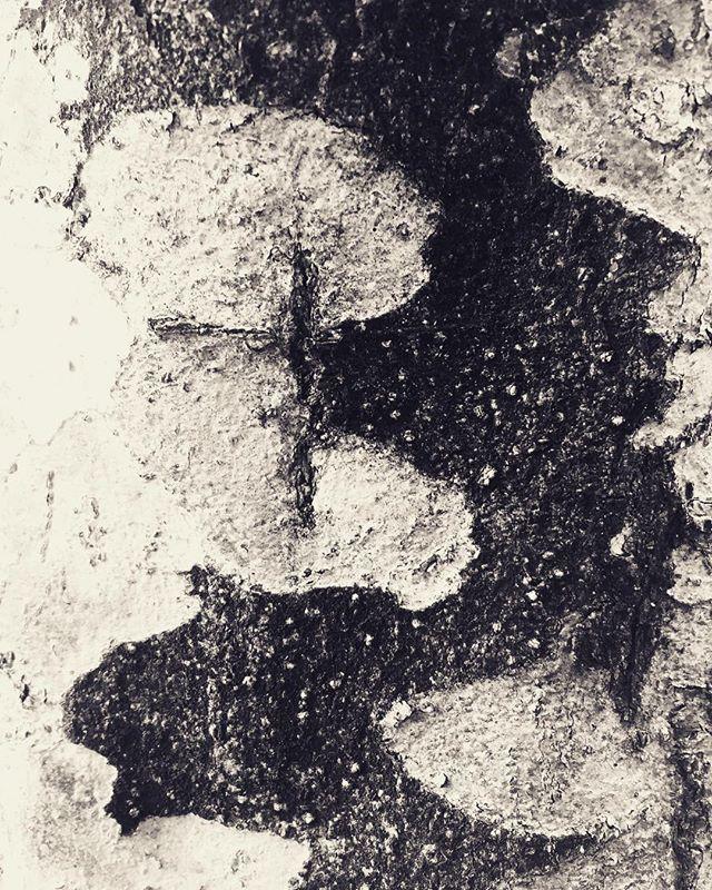 #下から見上げる #何気ない景色 #アート作品 #木 #枝 #モノクロ #シャドーアート #シャドウ #影 #街路樹 #フォルム #芸術 #アート #迫力 #街歩き #散歩 #生命 #意思 #コントラスト #身近 #素敵 #ビル #都会 #たくましい #日常 #近く#山 #散歩 #道 #日本 #japan