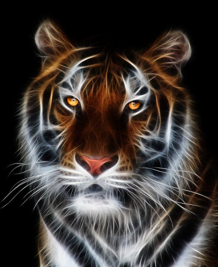 Tiger Tiger Tiger Tiger