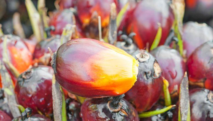 L'olio di palma fa male? Negli ultimi mesi ce lo siamo chiesti tutti. Abbiamo chiesto al prof. Lucio Lucchin quali sono i rischi reali per la salute che...