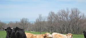 El ganado ecológico, el cuerpo de bomberos más eficiente de la naturaleza