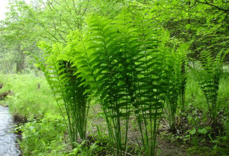 https://www.aliexpress.com/item/Free-Shipping-10pcs-Rare-Fern-Seeds-Vines-Climbing-Plants-Ornamental-Bonsai-Seeds-For-Home-Garden/32712465835.html?trace=msiteDetail2pcDetail Free Shipping! 10pcs Rare Fern Seeds, Vines, Climbing Plants, Ornamental Bonsai Seeds For Home Garden-in Bonsai from Home & Garden on Aliexpress.com | Alibaba Group